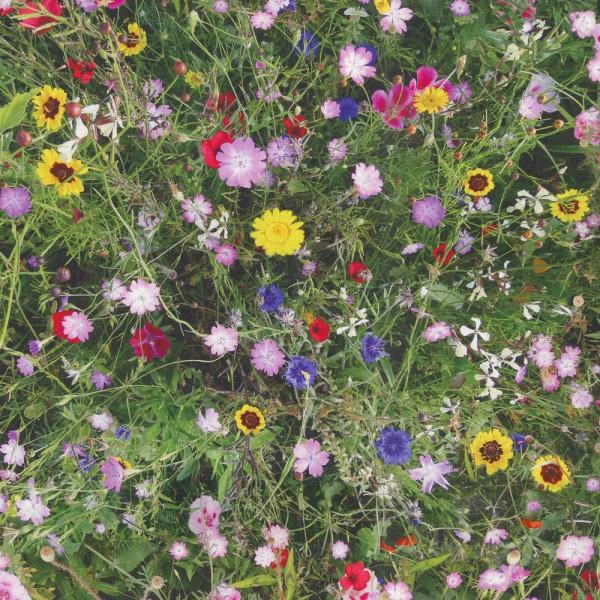 Dekostoff Blumenwiese bunt